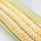 ¿Es bueno comer maíz en una dieta libre de gluten?