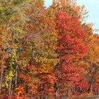 Lista de recursos naturales que se encuentran en el noreste de Estados Unidos