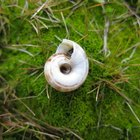 Cómo hacer agujeros en caracoles