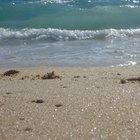 ¿Cuáles son los peligros de beber agua de mar?