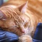 Cómo cuidar a un gato moribundo