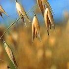 ¿El trigo puede causar gas y dolor de estomago severo?