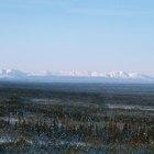 ¿Por qué es tan importante la tundra?