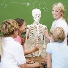 Forma sencilla de recordar los 206 huesos del cuerpo