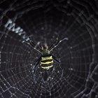 Cuánto tiempo tardan en desaparecer las mordeduras de araña