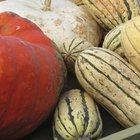 How to Cook Delicata Squash in the Oven