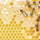 Cuánta miel hace una abeja