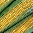 Nutrición del maíz dulce