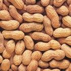 Health Benefits of Raw Peanuts