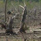 The Disadvantages of Deforestation