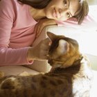 Cómo curar la piel con costras de mi gato
