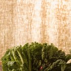 How Long Should You Steam Kale?