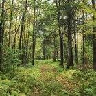 Los tipos de bosques
