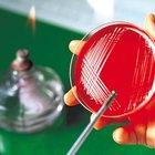 Cómo hacer una placa de Petri casera
