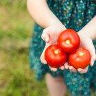 Los ocho alimentos más sanos para comerlos todos los días