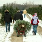 How to Start a Christmas Tree Farm
