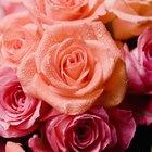 Cómo barnizar flores