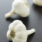 The Effects of Garlic Shampoo