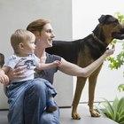 Síntomas de alergia a las mascotas en un niño