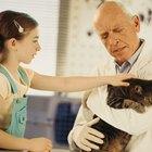 Enfermedades y afecciones en las colas de los gatos