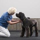 Cómo bajar la creatinina en perros con insuficiencia renal