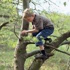 Cómo organizar una búsqueda del tesoro en la naturaleza con niños de preescolar