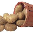 Los carbohidratos en el almidón de la patata