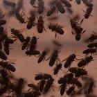 Actividades de niños con insectos