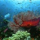 Cómo identificar los componentes de ecosistemas múltiples