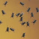 ¿Qué atrae a las moscas domésticas?