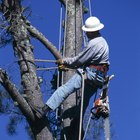 The Salary of a Certified Arborist
