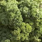 How Do I Season Kale?