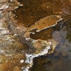 Listado de bacterias y giardias comunes encontradas en arroyos y corrientes