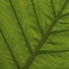 Gases que intervienen en la fotosíntesis y su absorción y liberación