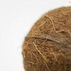 ¿Cuál es la diferencia entre el aceite de coco y la mantequilla de coco?