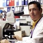 Cómo preparar un frotis o extendido microbiológico