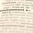 ¿Cuál es la diferencia entre la raíz y la base de una palabra?