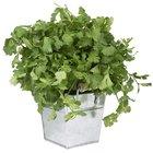 15 maneras de usar cilantro