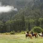 Cómo empacar para un viaje en caballo por Alaska