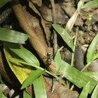 ¿Cuánto tiempo viven las hormigas aladas?