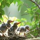 Enfermedades transmitidas por el excremento de las aves domésticas