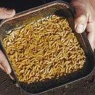 Cómo matar gusanos en una herida abierta