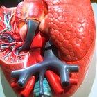 Lípidos versus carbohidratos como almacenadores de energía