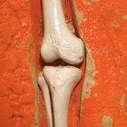 Partes de la rodilla humana