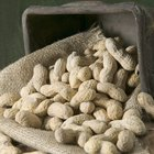 Do You Soak Raw Peanuts in Water Before You Cook Them?