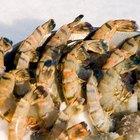 Tiger Prawns vs. Shrimp