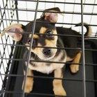 Cómo iniciar un negocio de pensión para perros