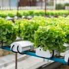 Hydroponic Vegetable Nutrients Vs. Organic
