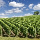 PEST Analysis for the Wine Industry
