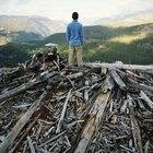 Los efectos de la tala de árboles en el ecosistema